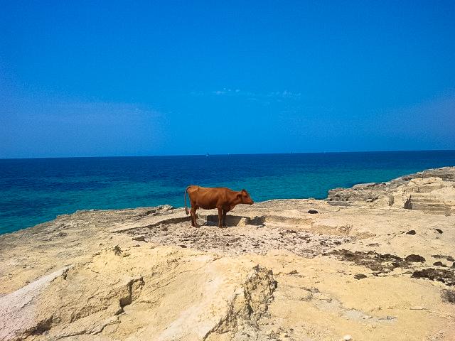 Vaca Marina