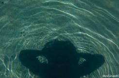 Sombra marina